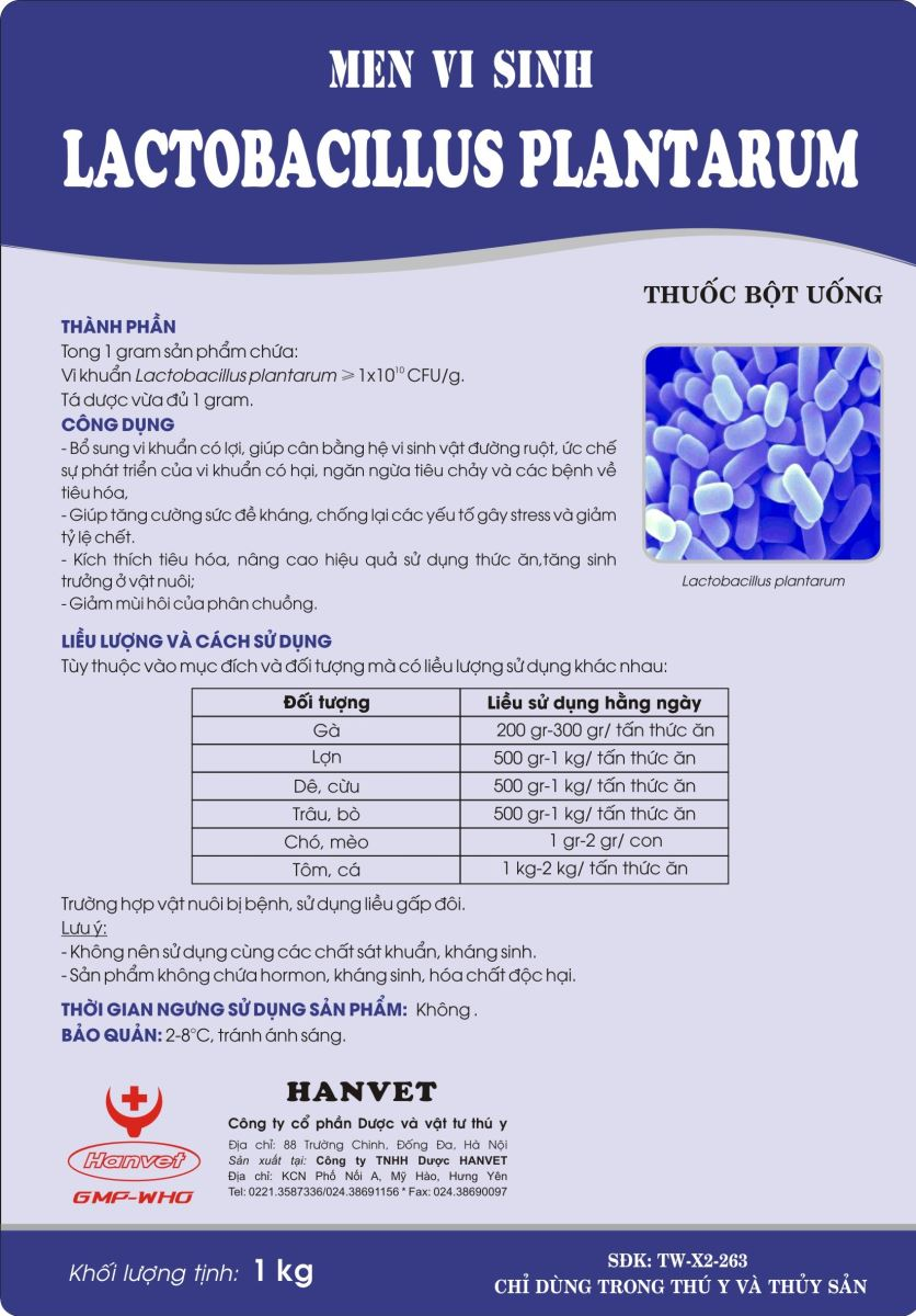 Men vi sinh Lactobacillus plantarum